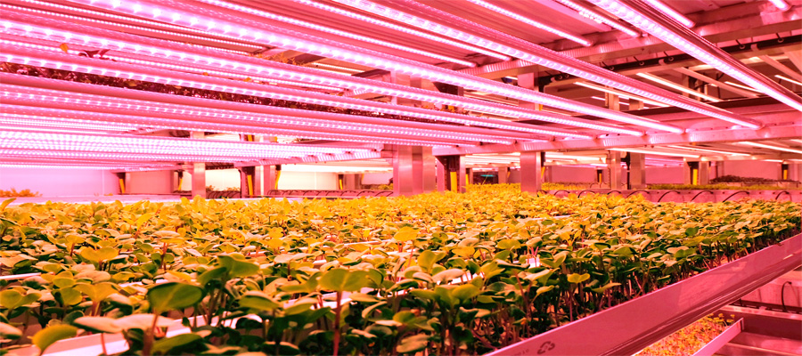 Verical farming GROWx Amsterdam