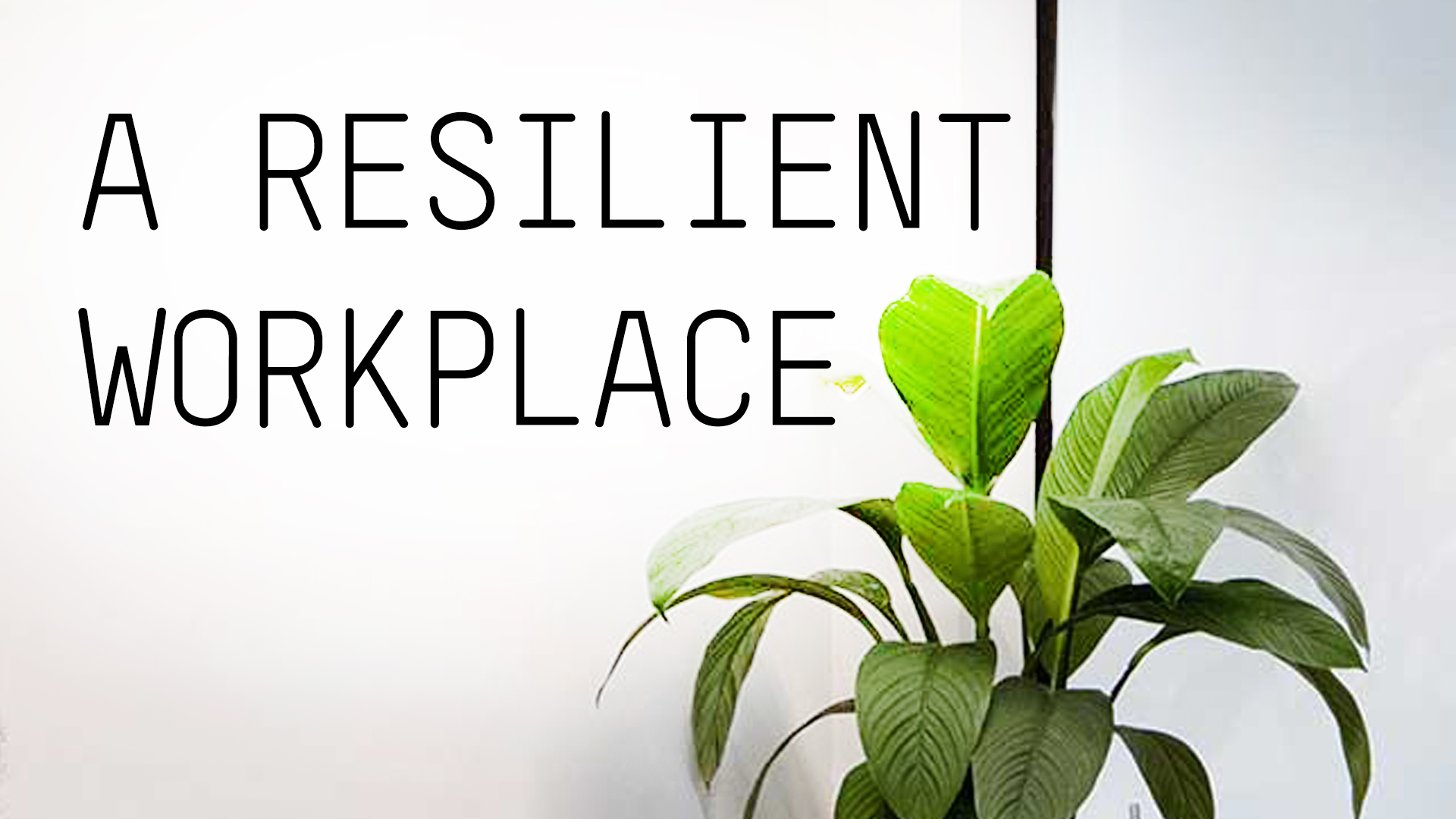 Returning to a resilient workplace