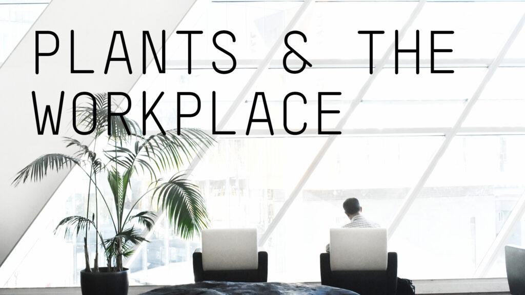 workspace-plants-benefits