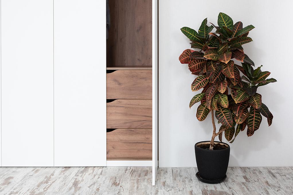 croton-plant-plant