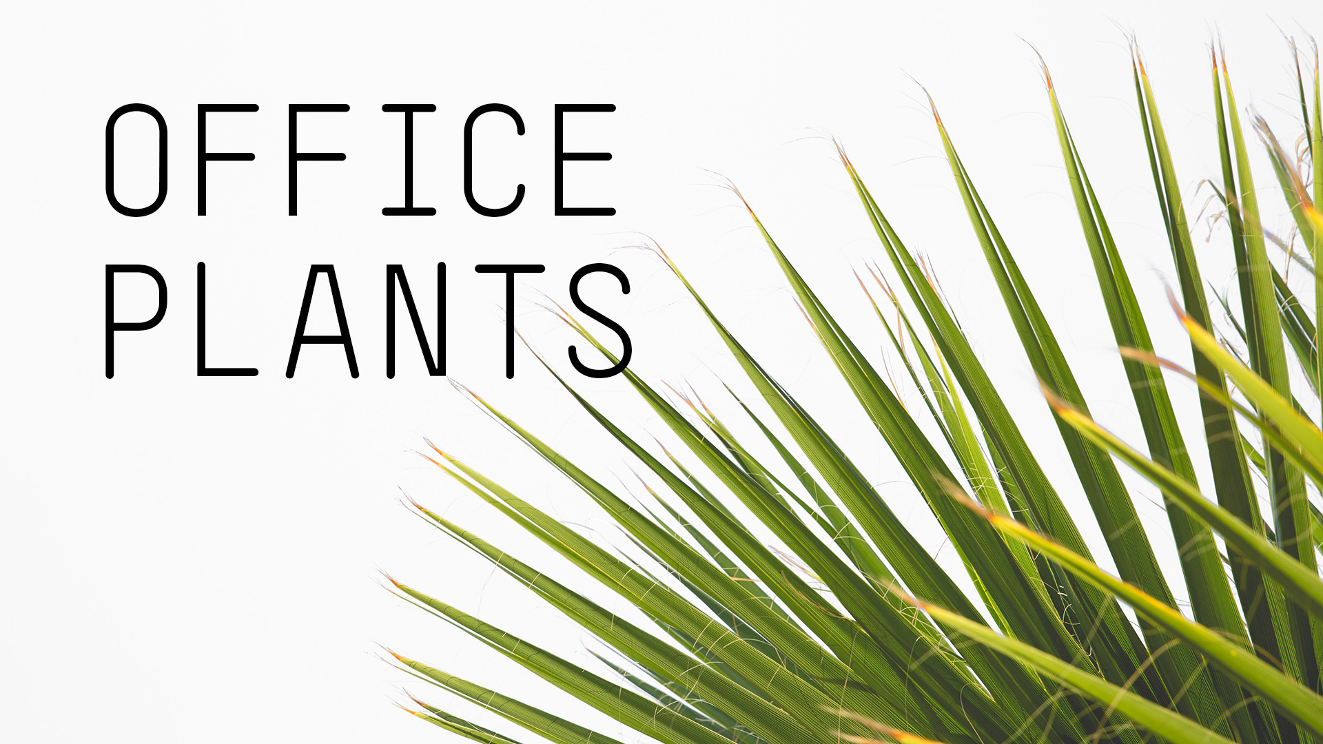 office-plant-ideas